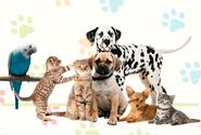 Avisos Clasificados de mascotas gratis